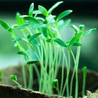 Homebox Pflanzen Aufzucht