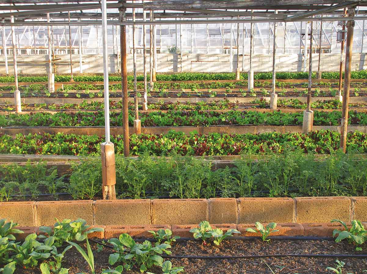 Industria Austauschreflektor Licht Pflanzen